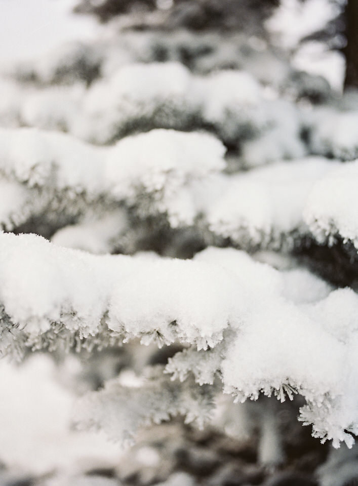snow covering a pine tree