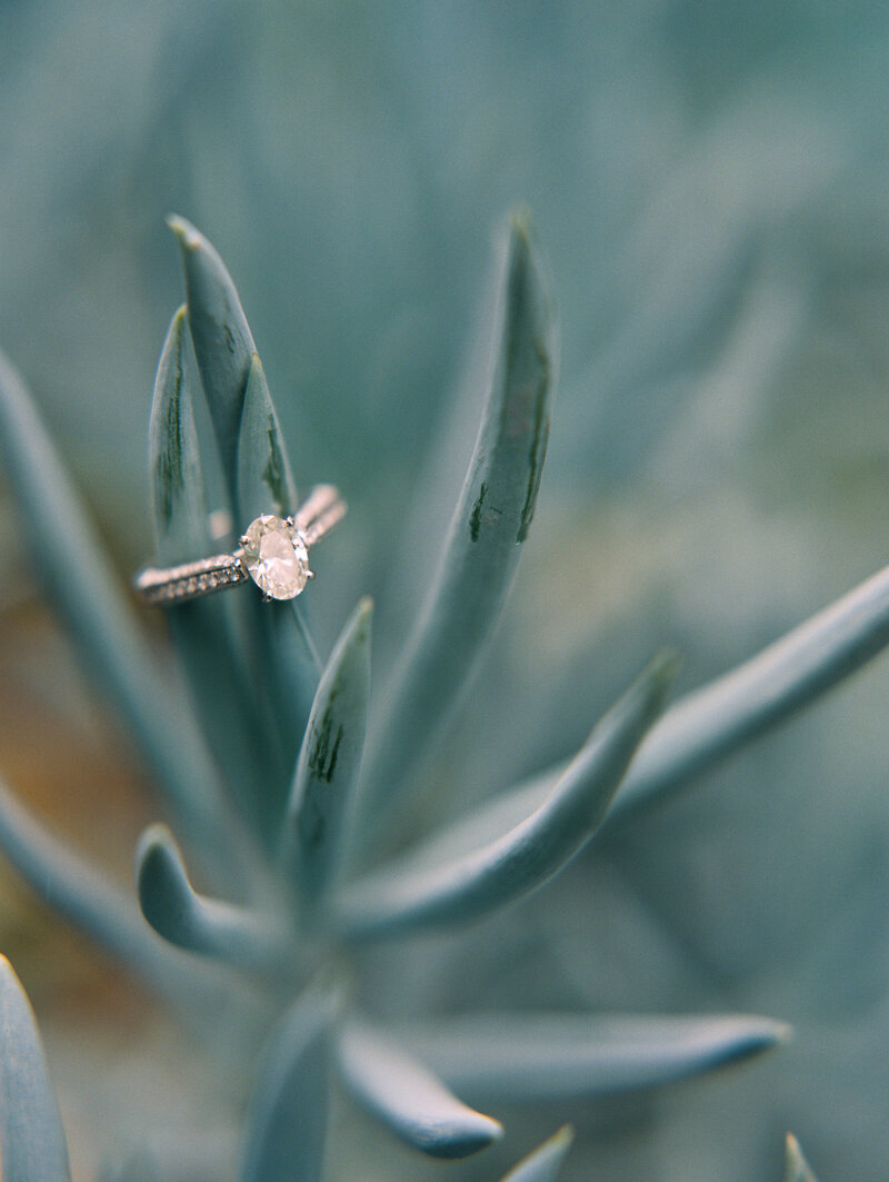 Engagement ring and succulent