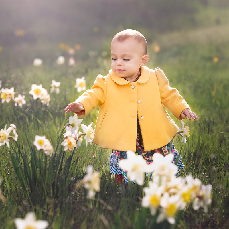 east-bay-photographer-toddler-Daffodils-5F0A8977