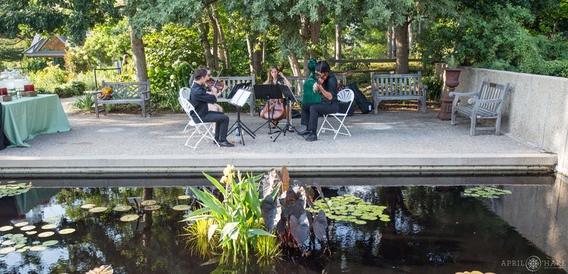 Nexus Strings play next to pretty water garden at Denver Botanic Gardens