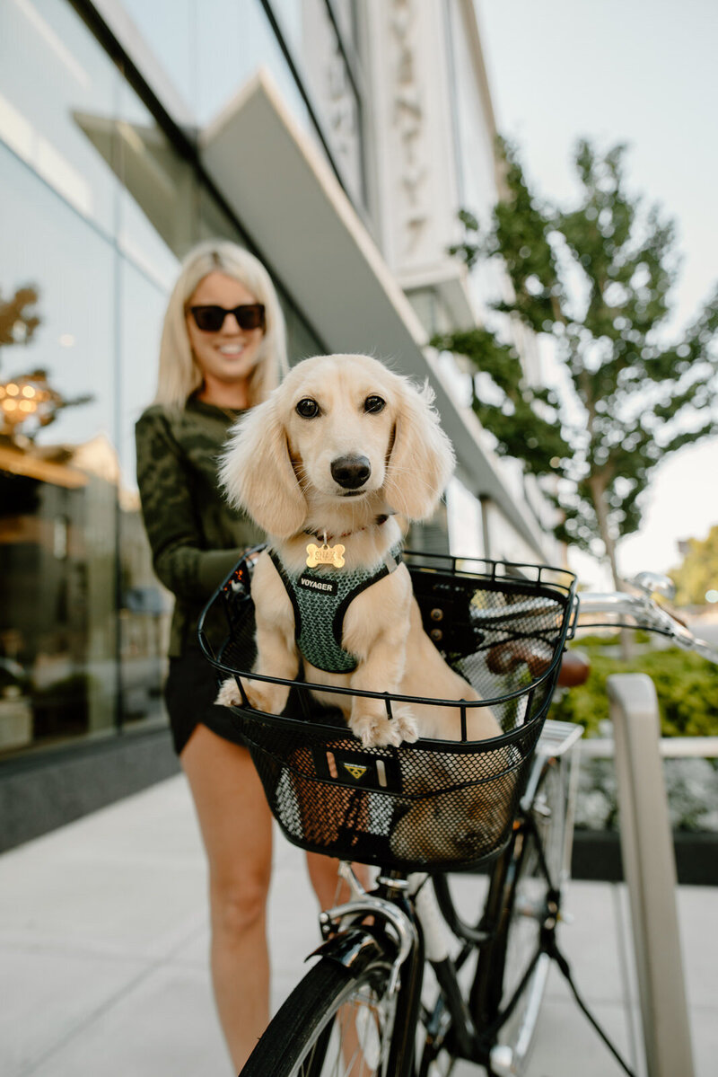 pet owner with her dog in a bicycle basket