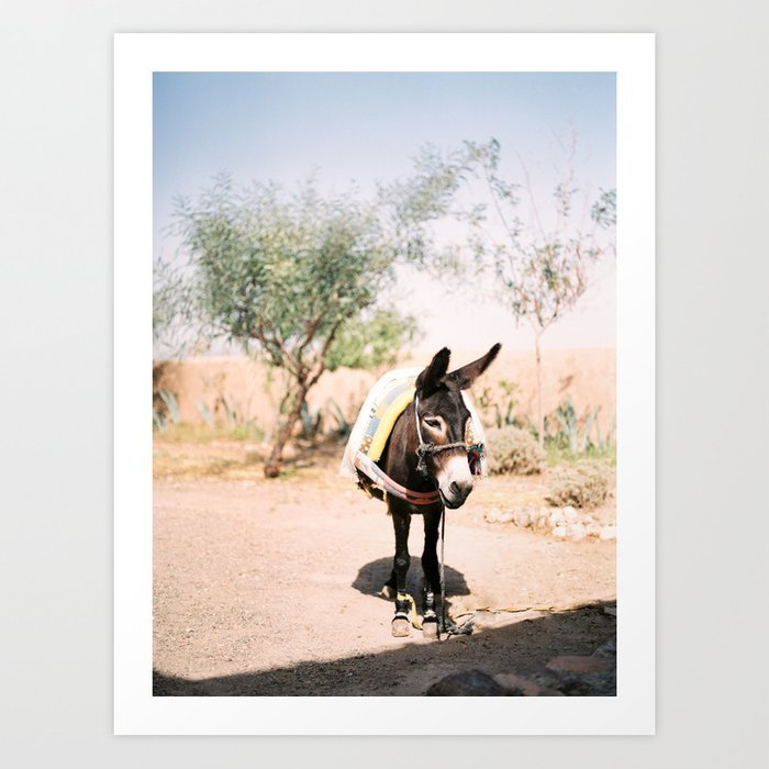 cute-donkey-in-the-agafay-desert-of-morocco-marrakech-travel-photography-prints