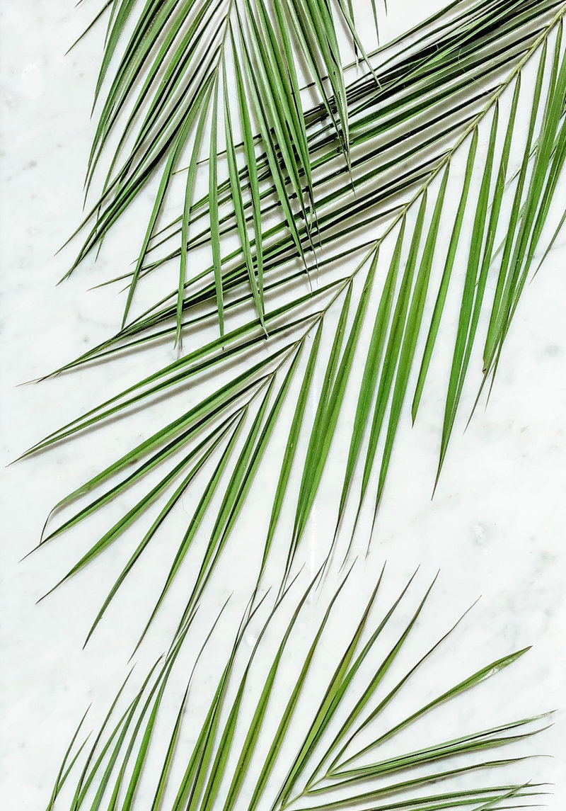 Palm Fronds on Carrara Marble Backdrop