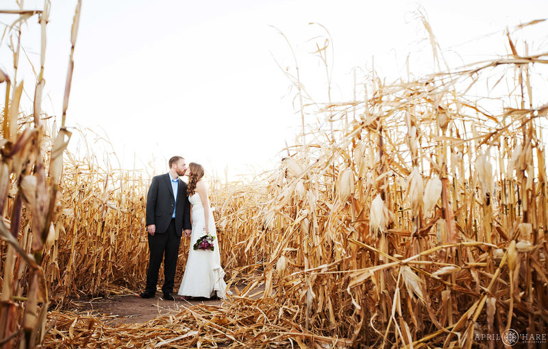 Kissing in the corn maze wedding photography in Denver CO Chatfield Farms