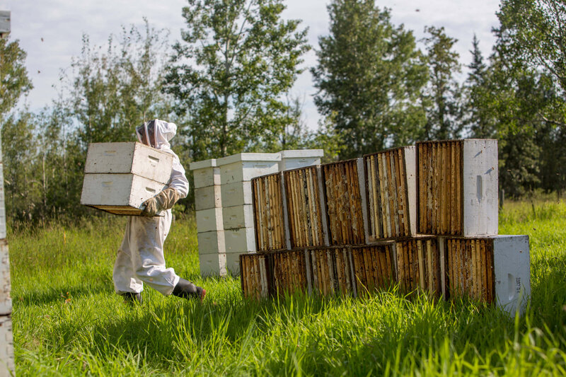 beekeepers tending to hives in the grass