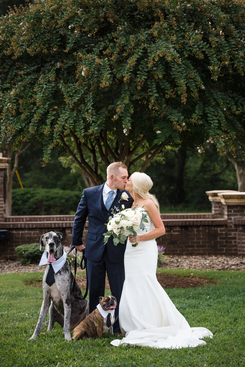 Bride and groom kissing with their grey and brown dogs beside them outdoors