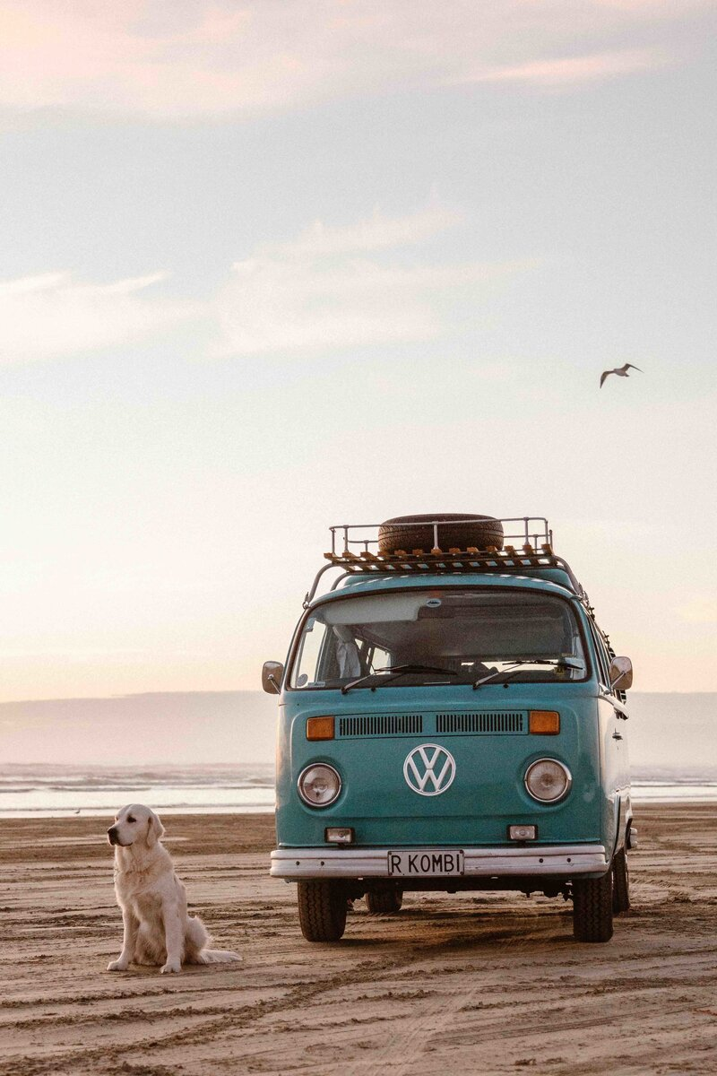A teal kombi van called Rhonda is on the beach at sunset with golden labrador