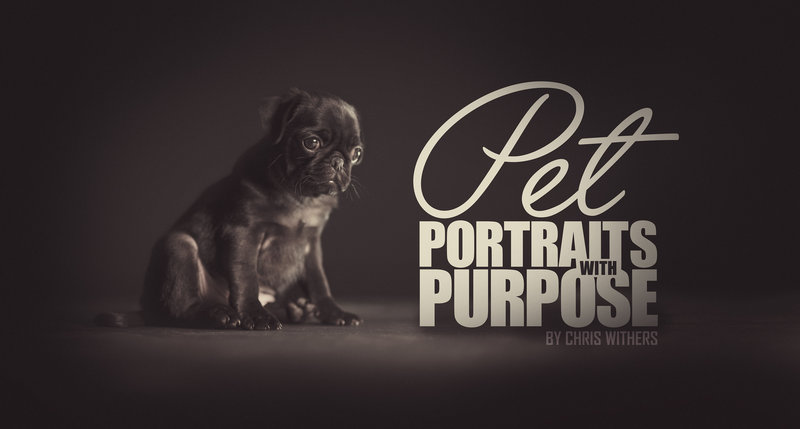 Pet portrait photographer in Springfield, IL