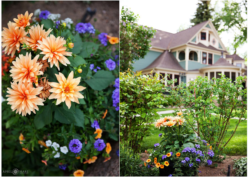 Dahlia-Garden-at-Fort-Collins-Best-Wedding-Venue-in-Colorado-Tapestry-House