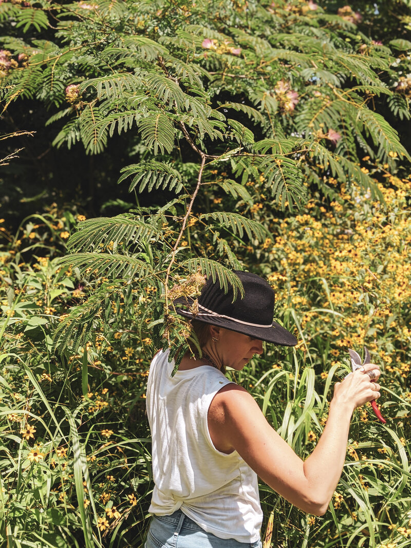 Audrey foraging Mimosa - 2020