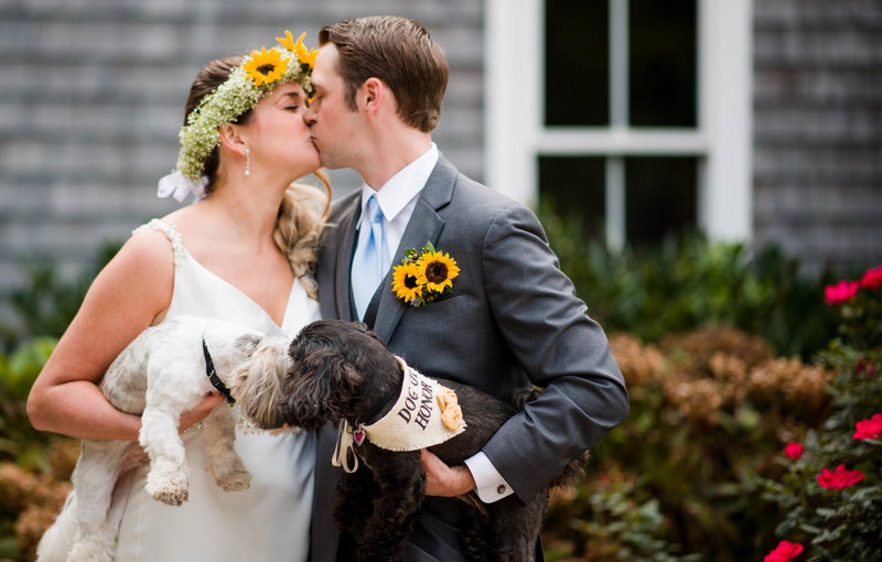16 Wedding photos with dogs kissing at Borsari Gallery