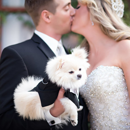 wedding couple with their cute puppy writes review for photos edge