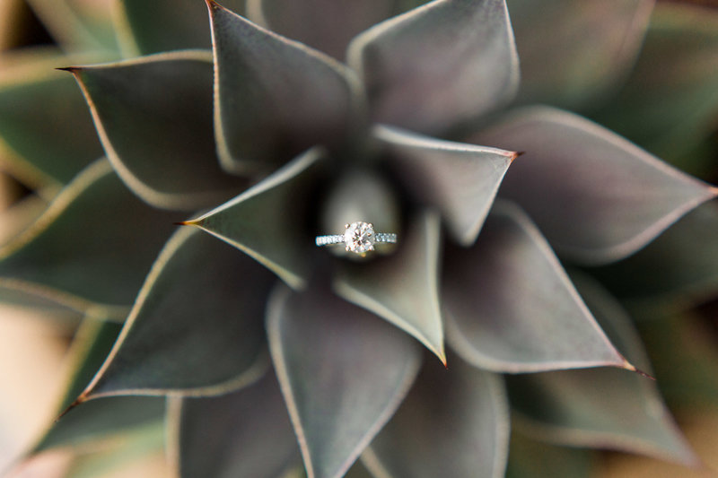diamond engagement ring inside a succulent