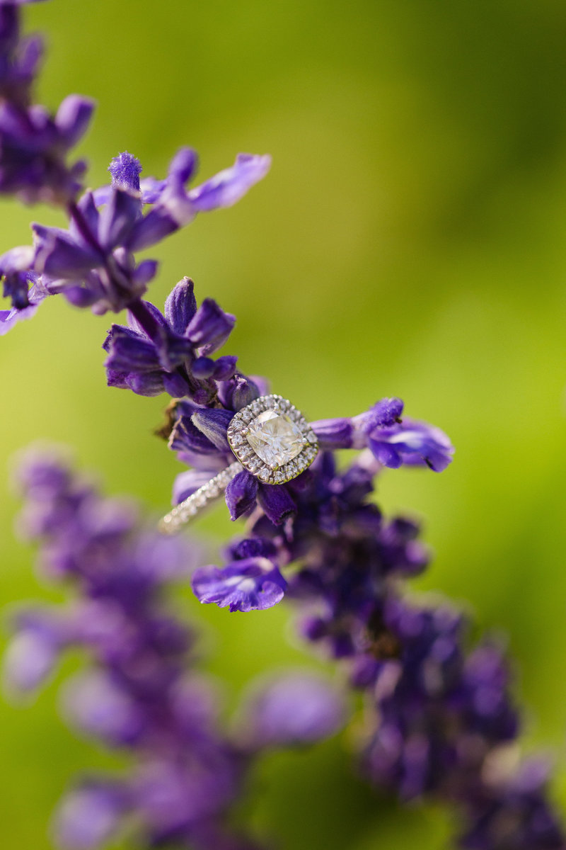 Engagement ring on purple flower in New Jersey botanical Gardens