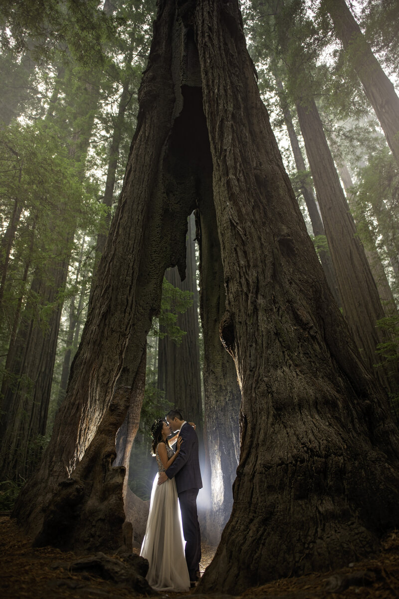 Magical engagement photo of a couple in the Redwoods in Northern California