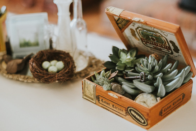 bird-eggs-cuban-cigar-box-succulents