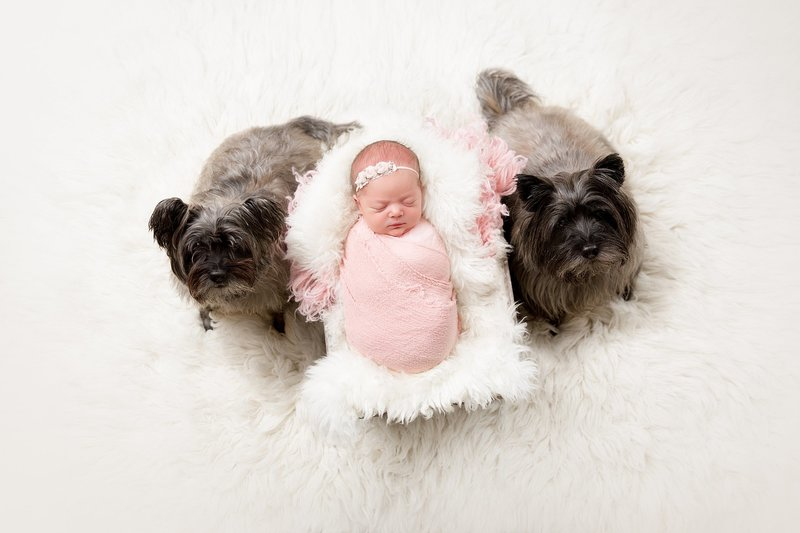 newborn baby girl in basket with dogs