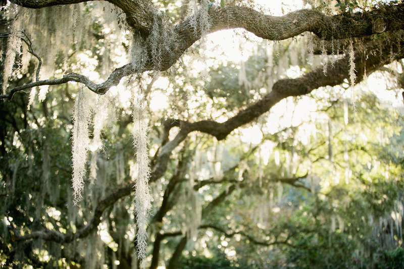 legare-waring-house-charleston-wedding-photographers-philip-casey-photo-022