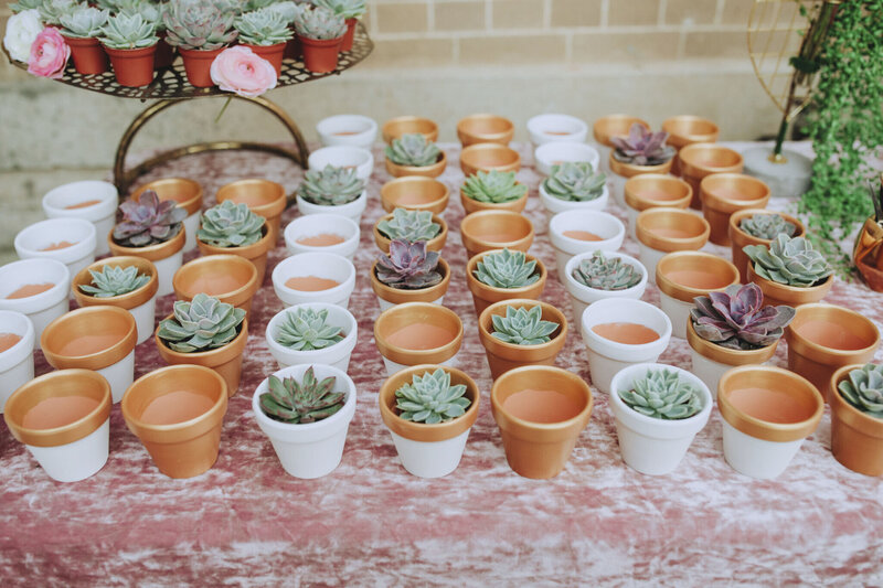 rows of tiny succulents in pots