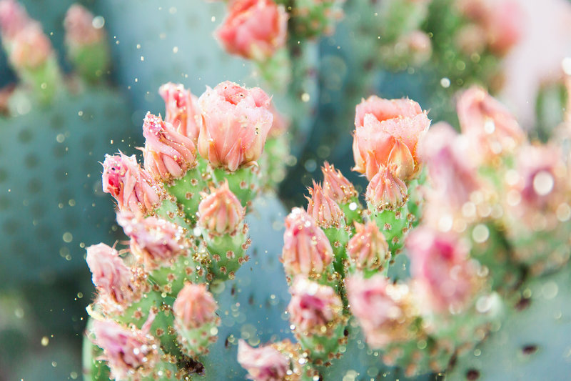 Bunny Ears Prickly Pear Cactus Glitter II
