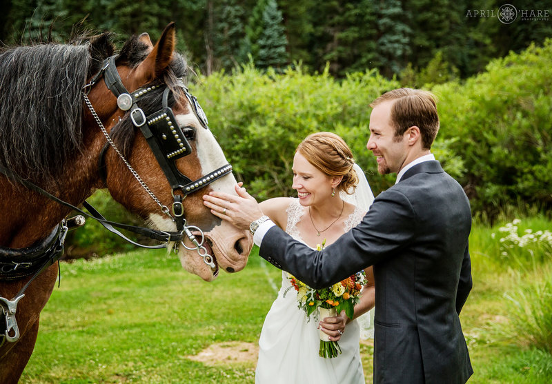 Couple pets horse on wedding day at Mountain View Ranch in Colorado