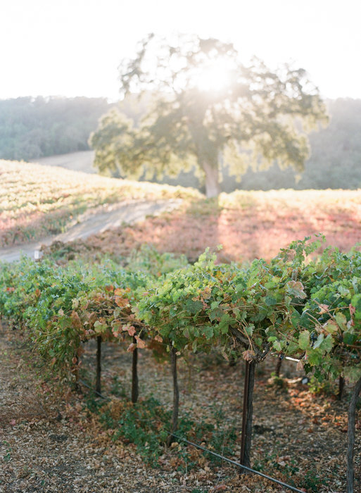 Molly-Carr-Photography-Paris-Film-Photographer-France-Wedding-Photographer-Europe-Destination-Wedding-HammerSky-Vineyards-Paso-Robles-California-Wine-Country-27
