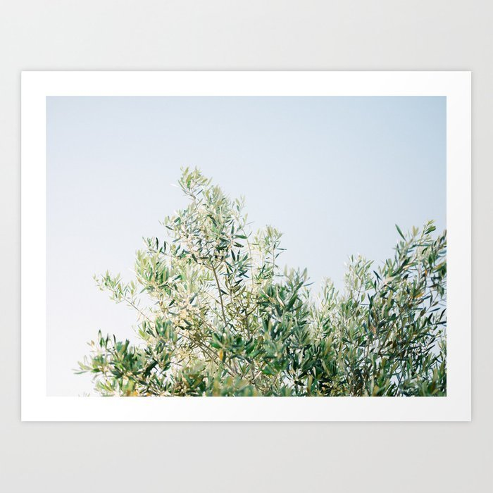 the-olive-tree-italy-fine-art-travel-photography-ostuni-art2132363-prints
