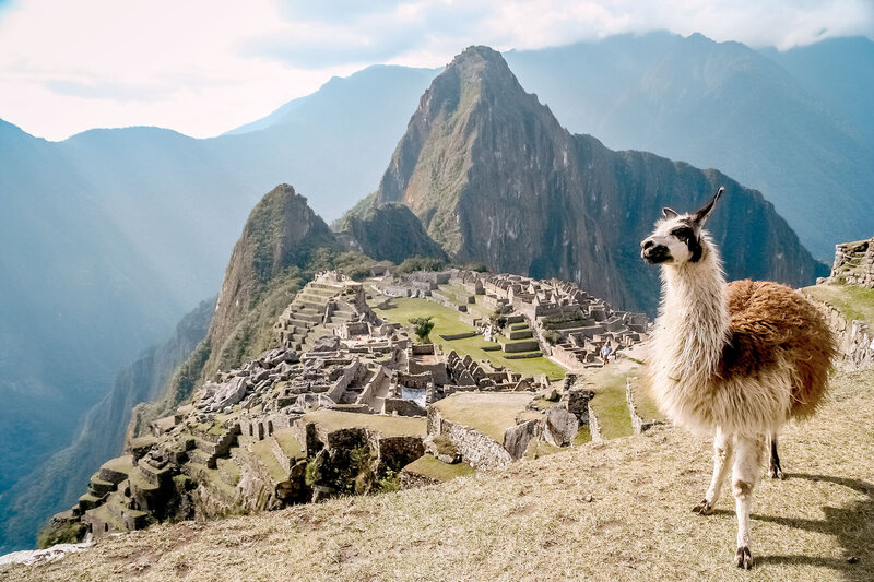 alpaca at Machu Picchu, Peru - KC Abroad