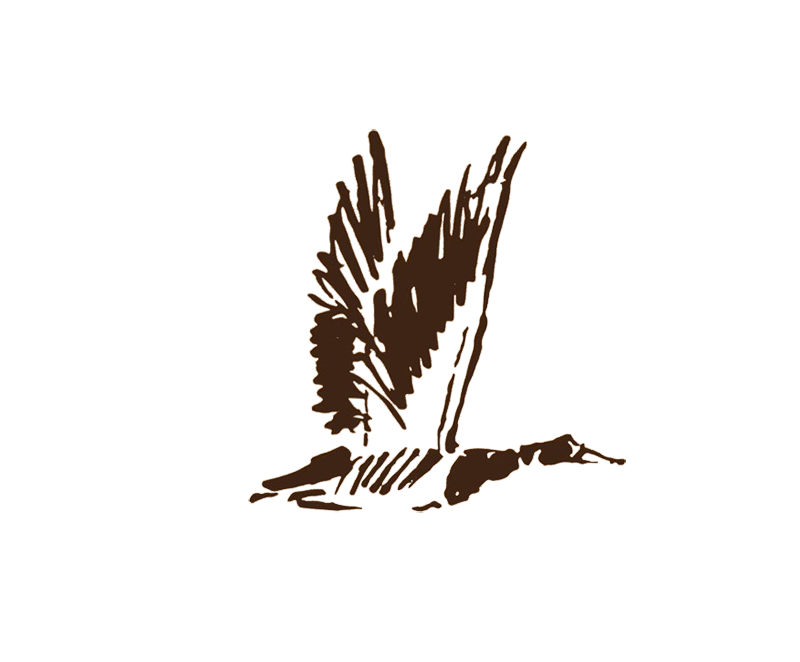 Duck logo for waterfowl outfitter