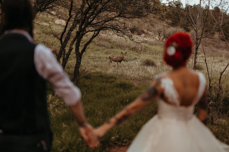 Deer Wedding Couple Photo