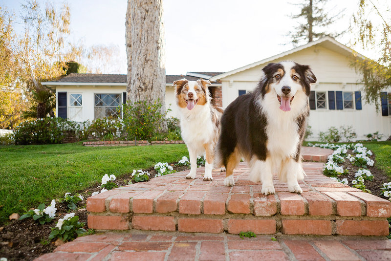 San-Diego-Pet-Family-Photographer-Ali-Peterson-Photography_0032