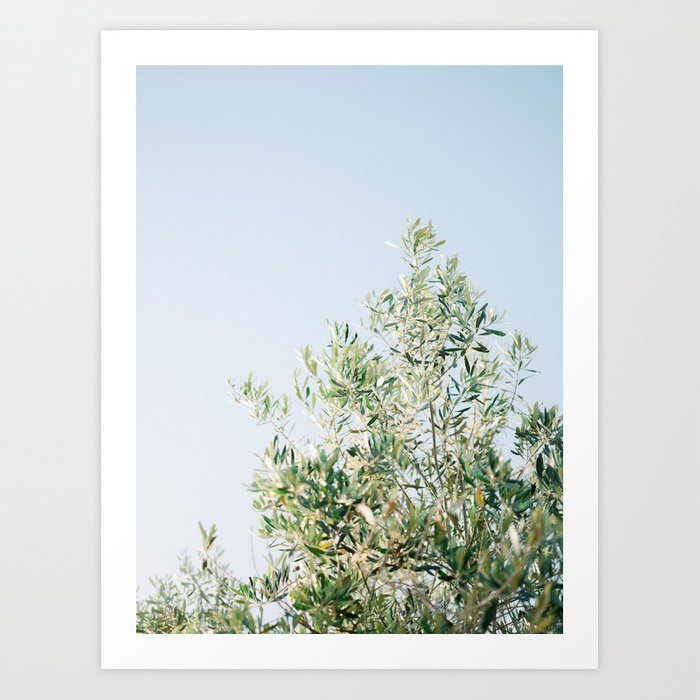 the-olive-tree-italy-fine-art-travel-photography-ostuni-art-prints