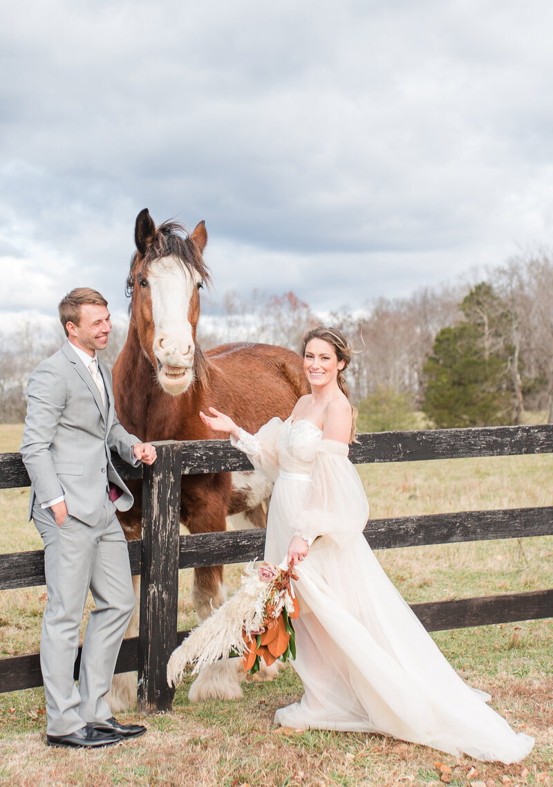 bride and groom smiling at their mount ida wedding smiling horse Clydesdale