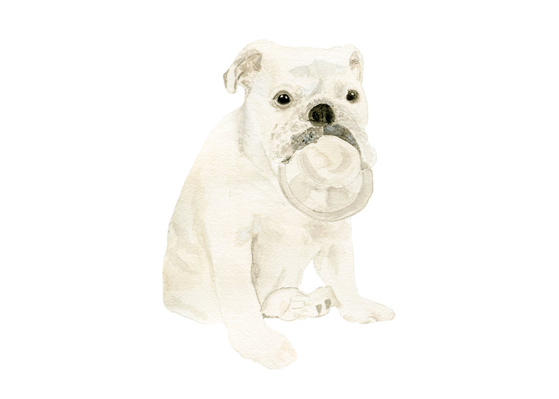 watercolor-pet-portrait-Theo-H-The-Welcoming-District copy