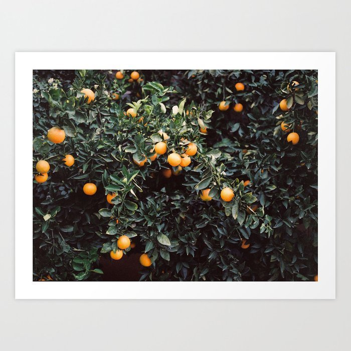 oranges-moody-colorful-travel-photography-botanical-green-wall-with-oranges-prints